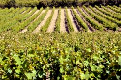 Roussillon Wine Region
