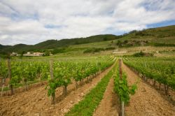 Rhone Valley Wine Region